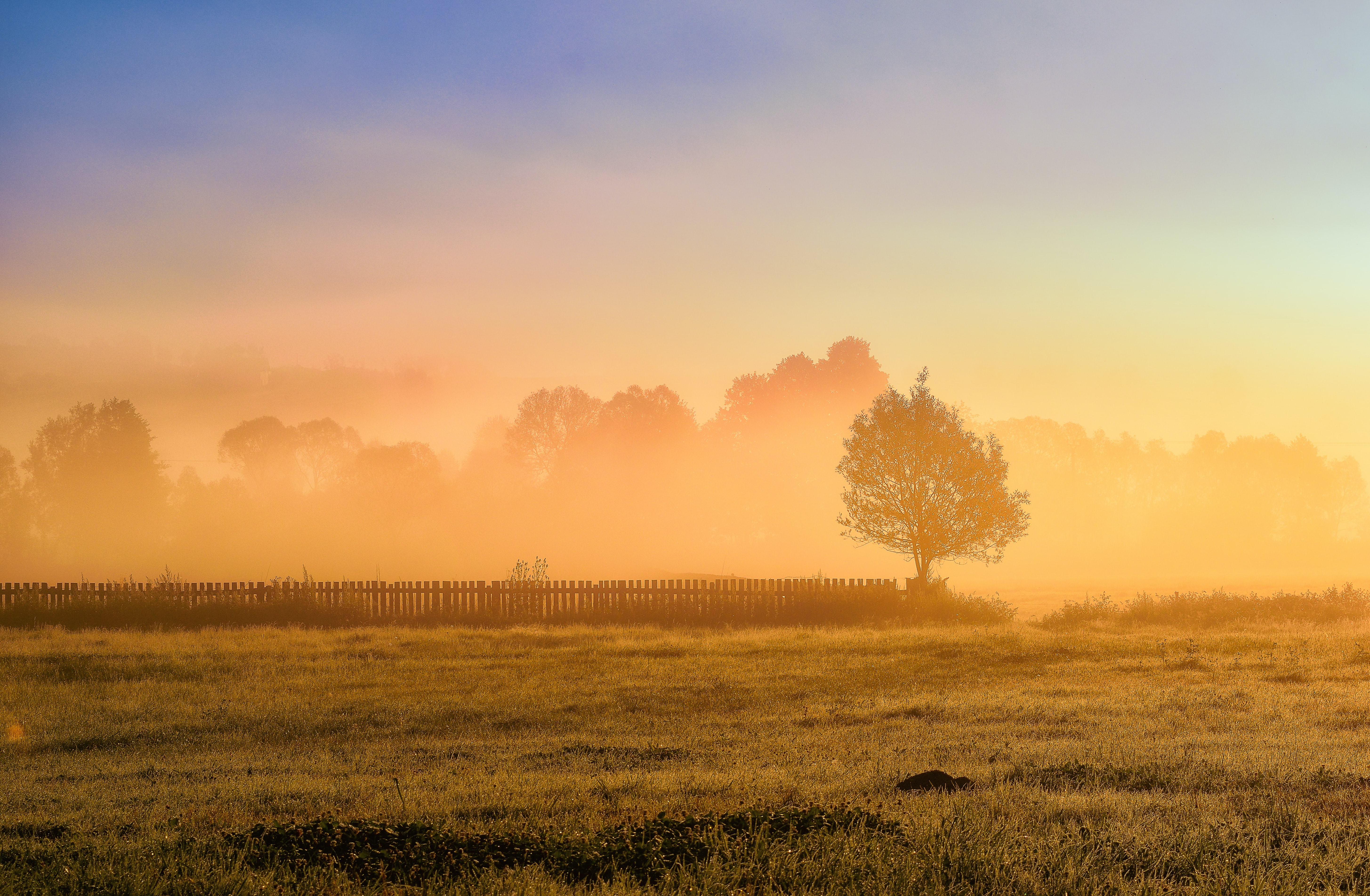 104087 download wallpaper Nature, Wood, Tree, Fence, Grass, Sun screensavers and pictures for free