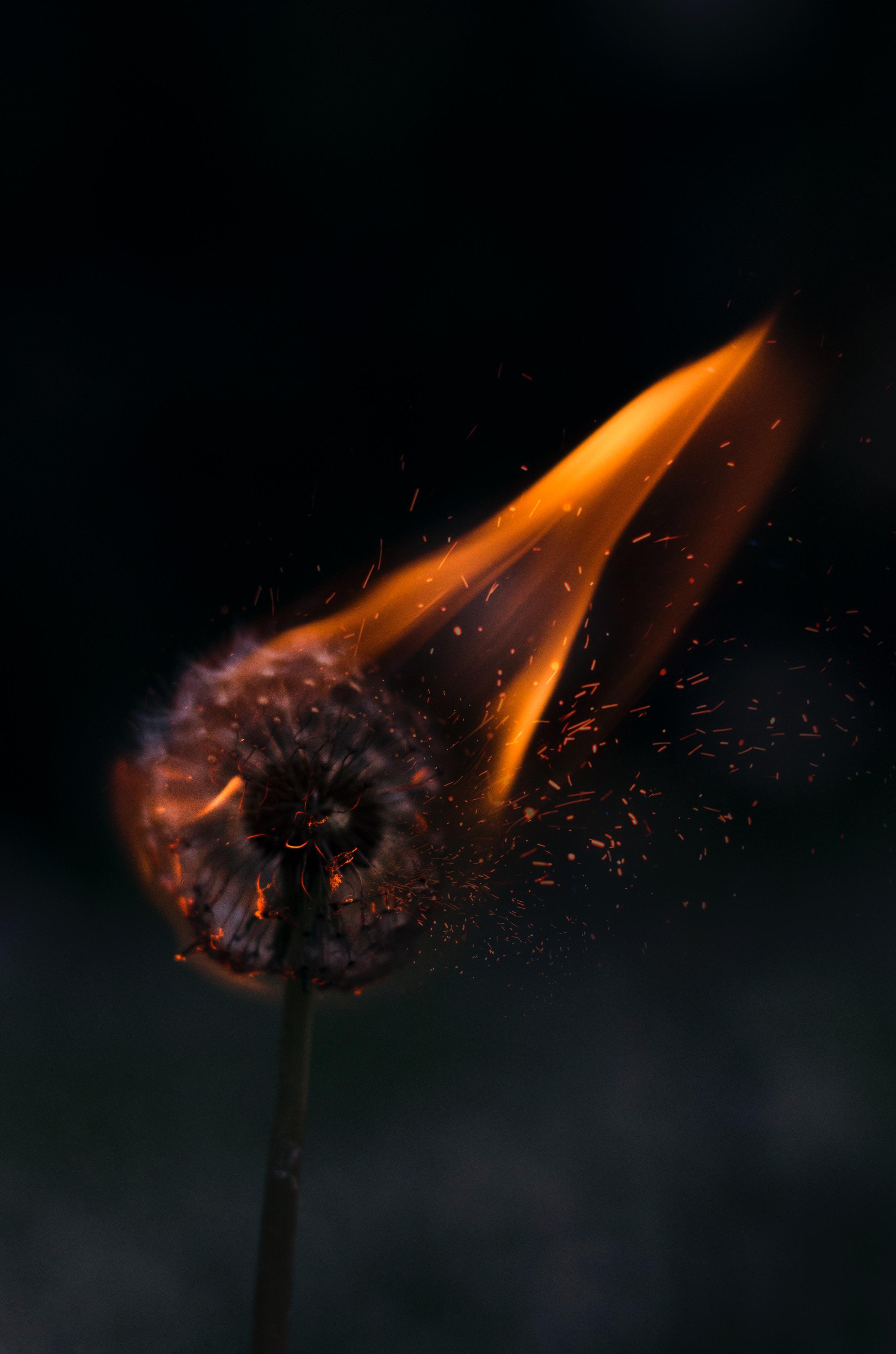124446 Hintergrundbild herunterladen Blumen, Feuer, Löwenzahn, Funken - Bildschirmschoner und Bilder kostenlos