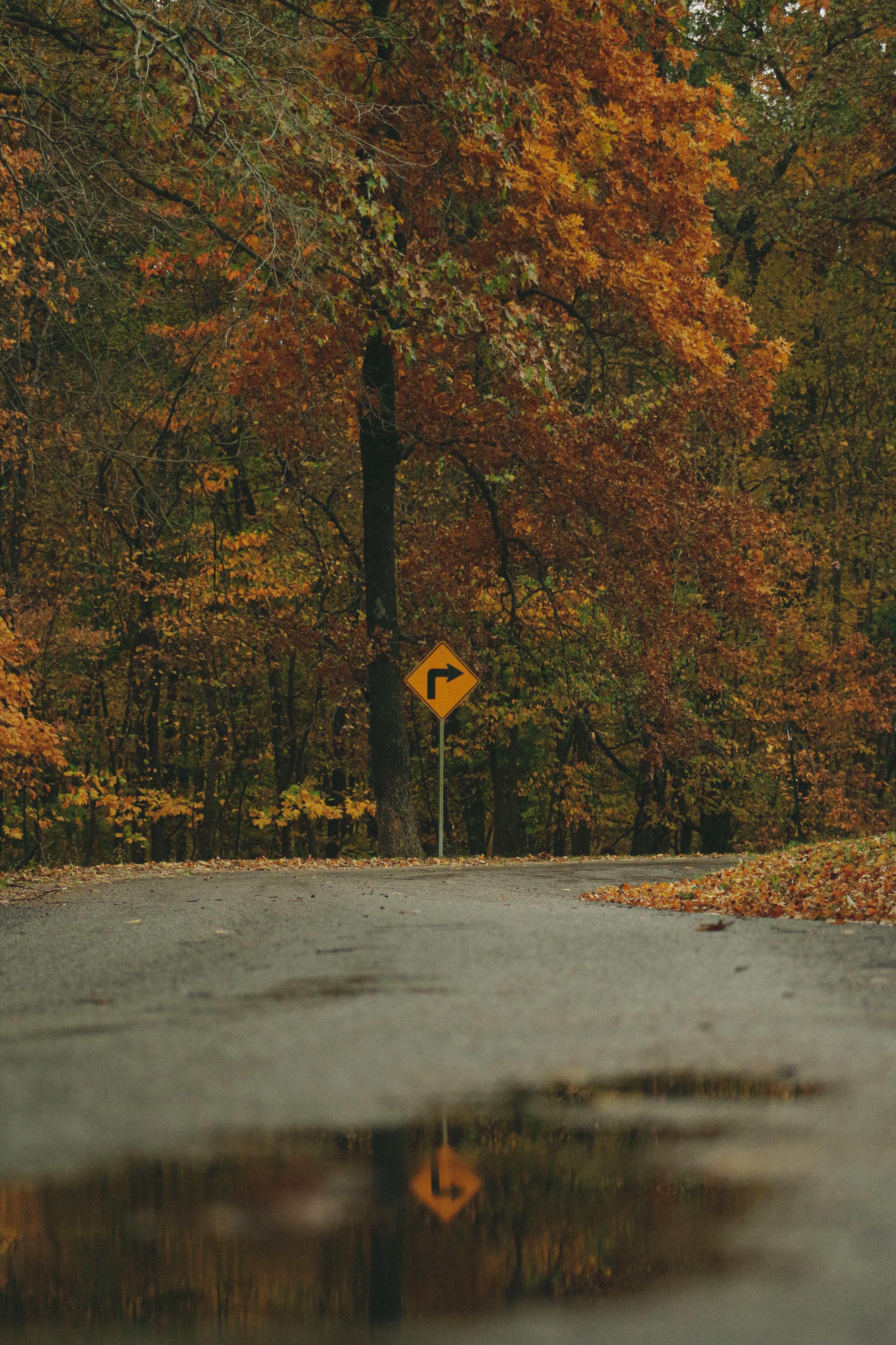122831 download wallpaper Nature, Arrow, Trees, Forest, Autumn, Sign screensavers and pictures for free