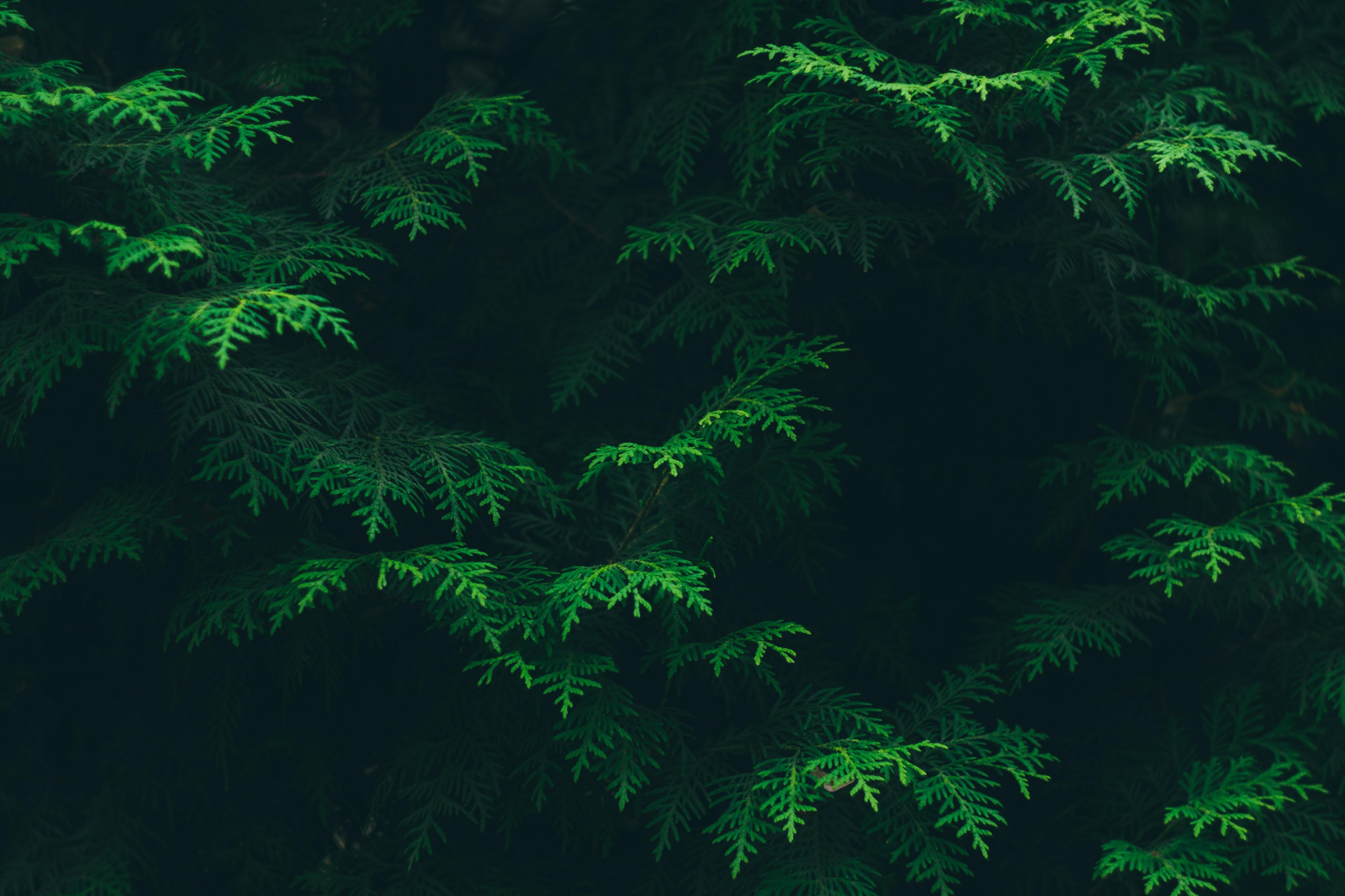 55193 завантажити Зелений шпалери на телефон безкоштовно, Природа, Листя, Рослина, Флора, Флори Зелений картинки і заставки на мобільний