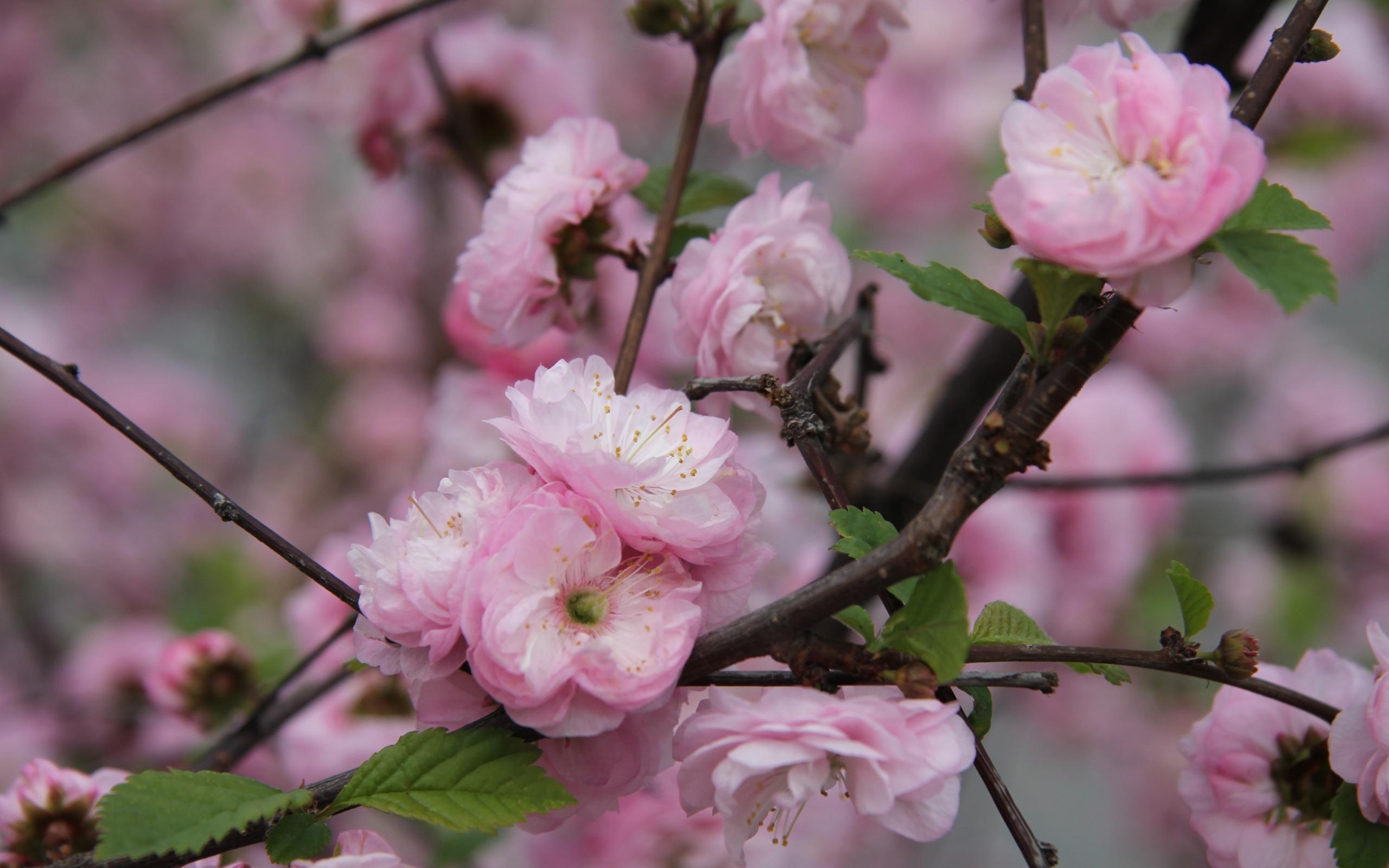 27324 descargar fondo de pantalla Plantas, Flores, Árboles: protectores de pantalla e imágenes gratis