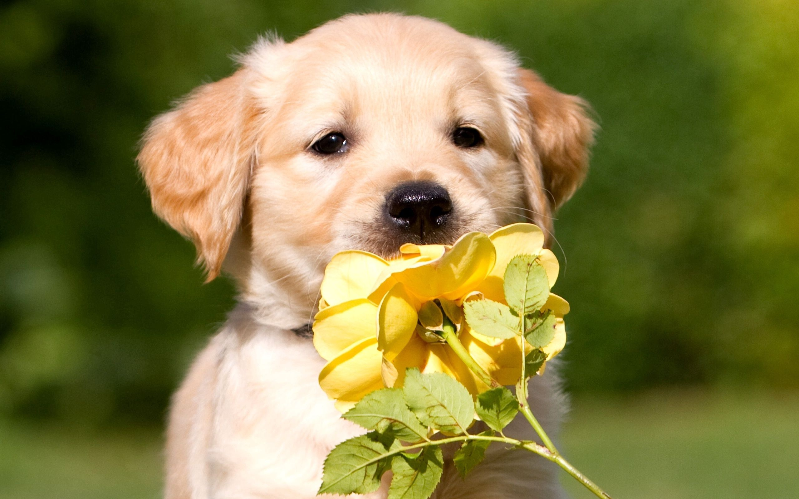 107004 download wallpaper Animals, Puppy, Muzzle, Flower screensavers and pictures for free