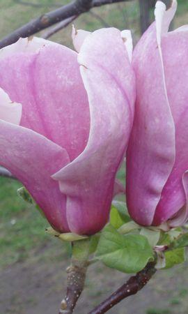 7822 скачать обои Растения, Цветы - заставки и картинки бесплатно