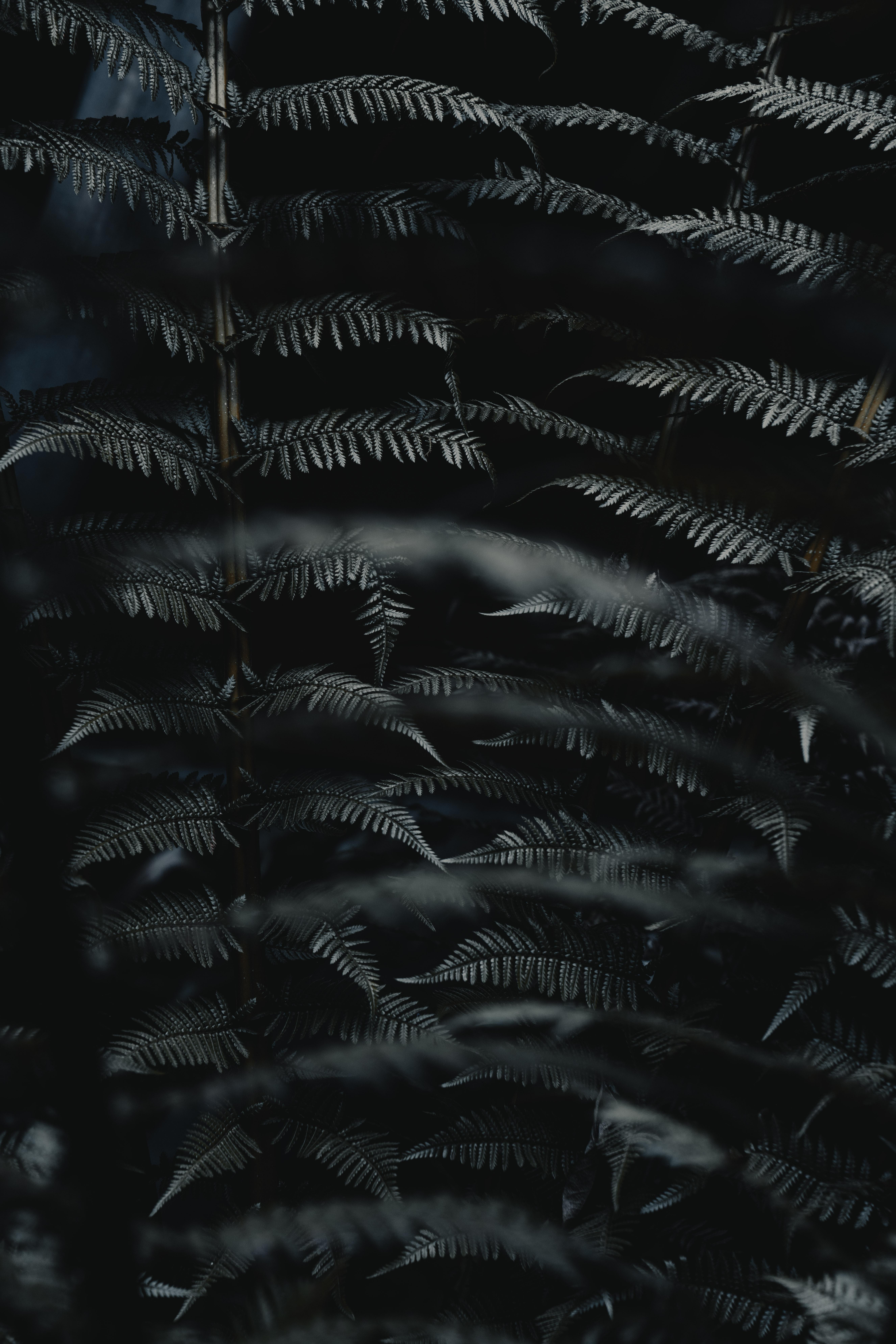 97386 télécharger le fond d'écran Macro, Fougère, Feuilles, Le Noir, Sculpté, Branche, Plante, Planter - économiseurs d'écran et images gratuitement