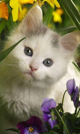35986 скачать Желтые обои на телефон бесплатно, Животные, Кошки (Коты, Котики) Желтые картинки и заставки на мобильный
