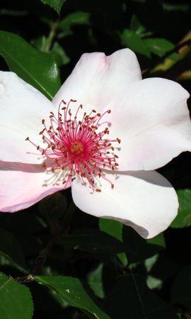 22861 скачать обои Растения, Цветы - заставки и картинки бесплатно