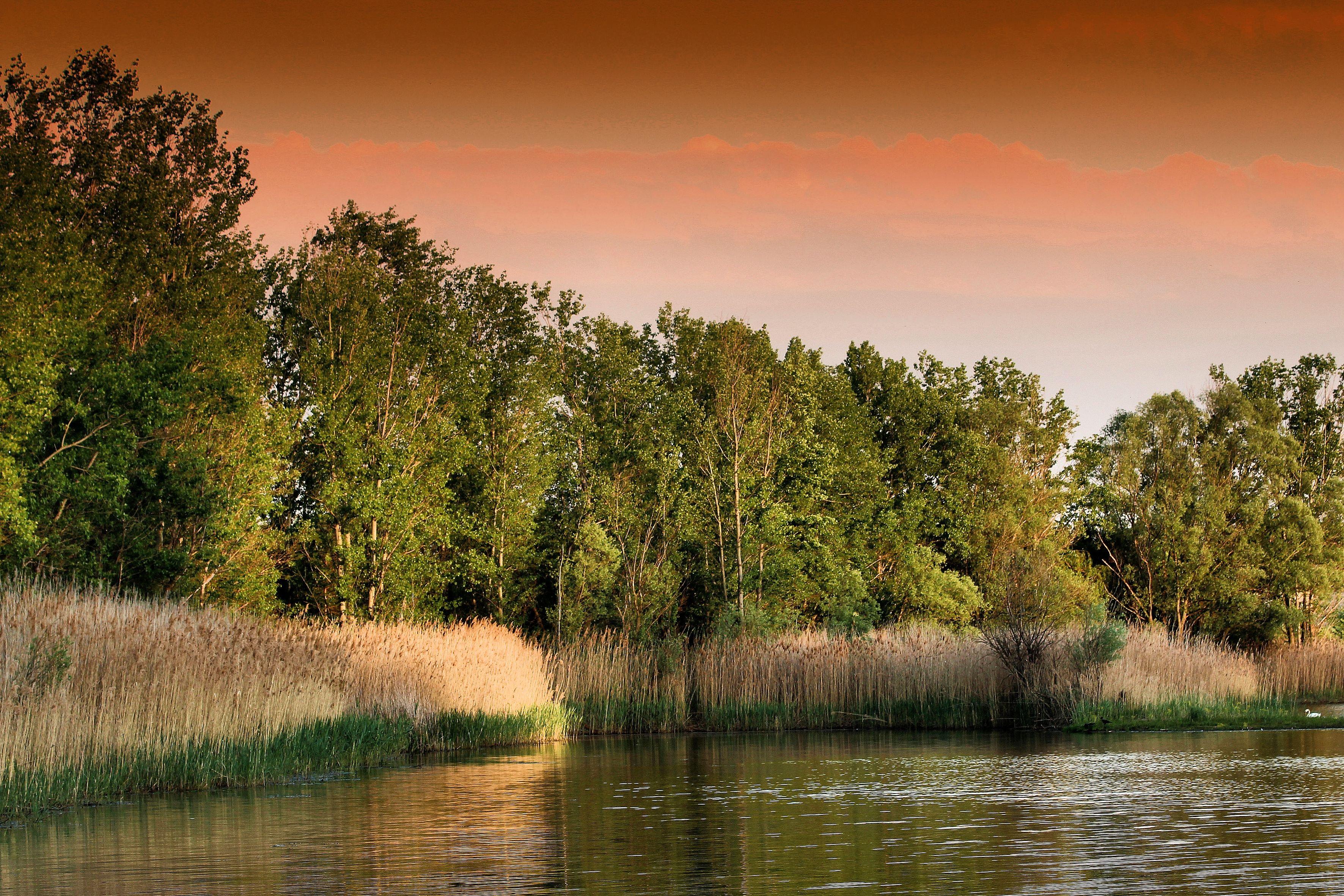 78018 Заставки и Обои Трава на телефон. Скачать Природа, Закат, Озеро, Трава, Деревья картинки бесплатно