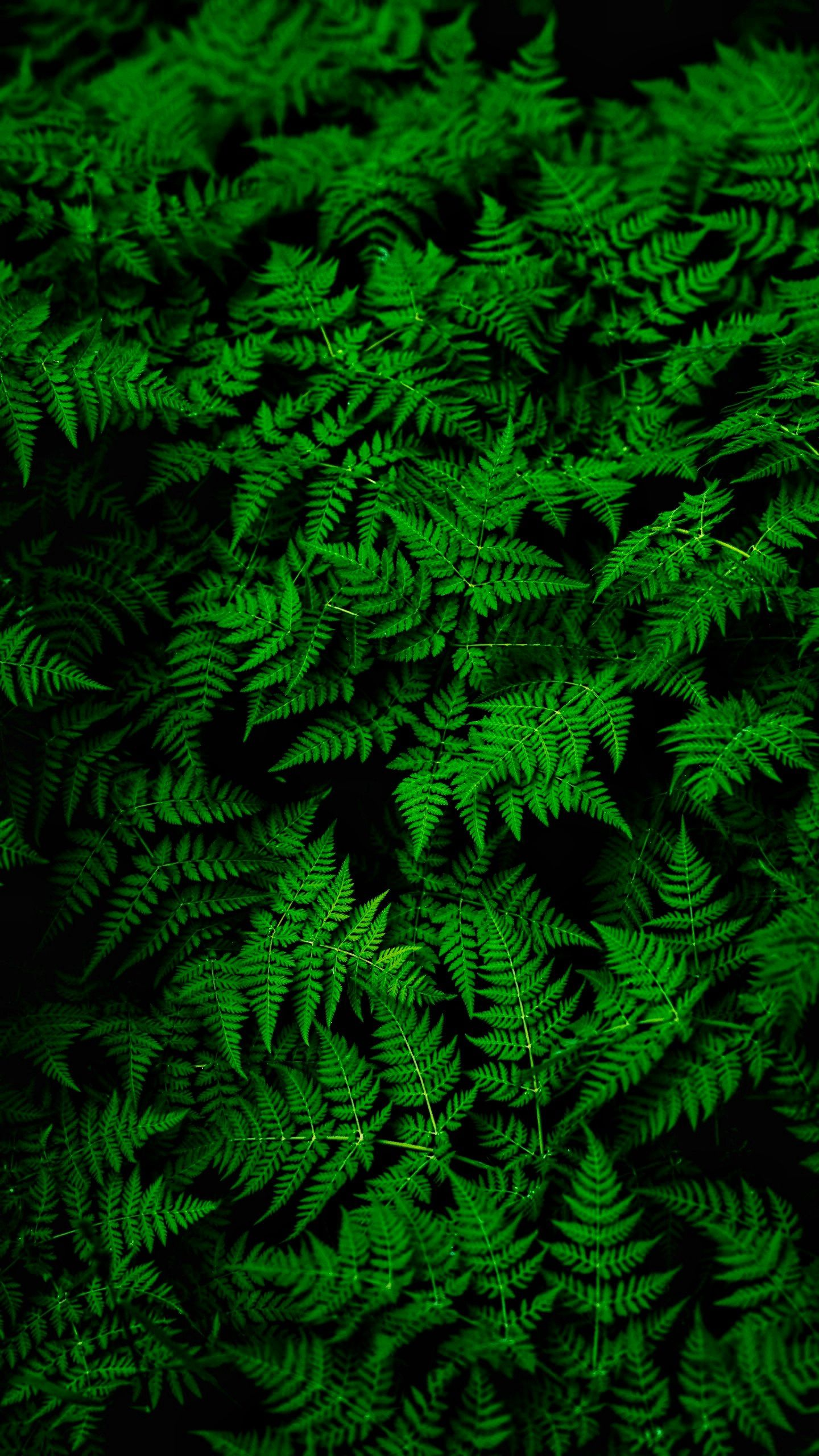 119728 download wallpaper Plant, Nature, Leaves, Fern, Thick screensavers and pictures for free