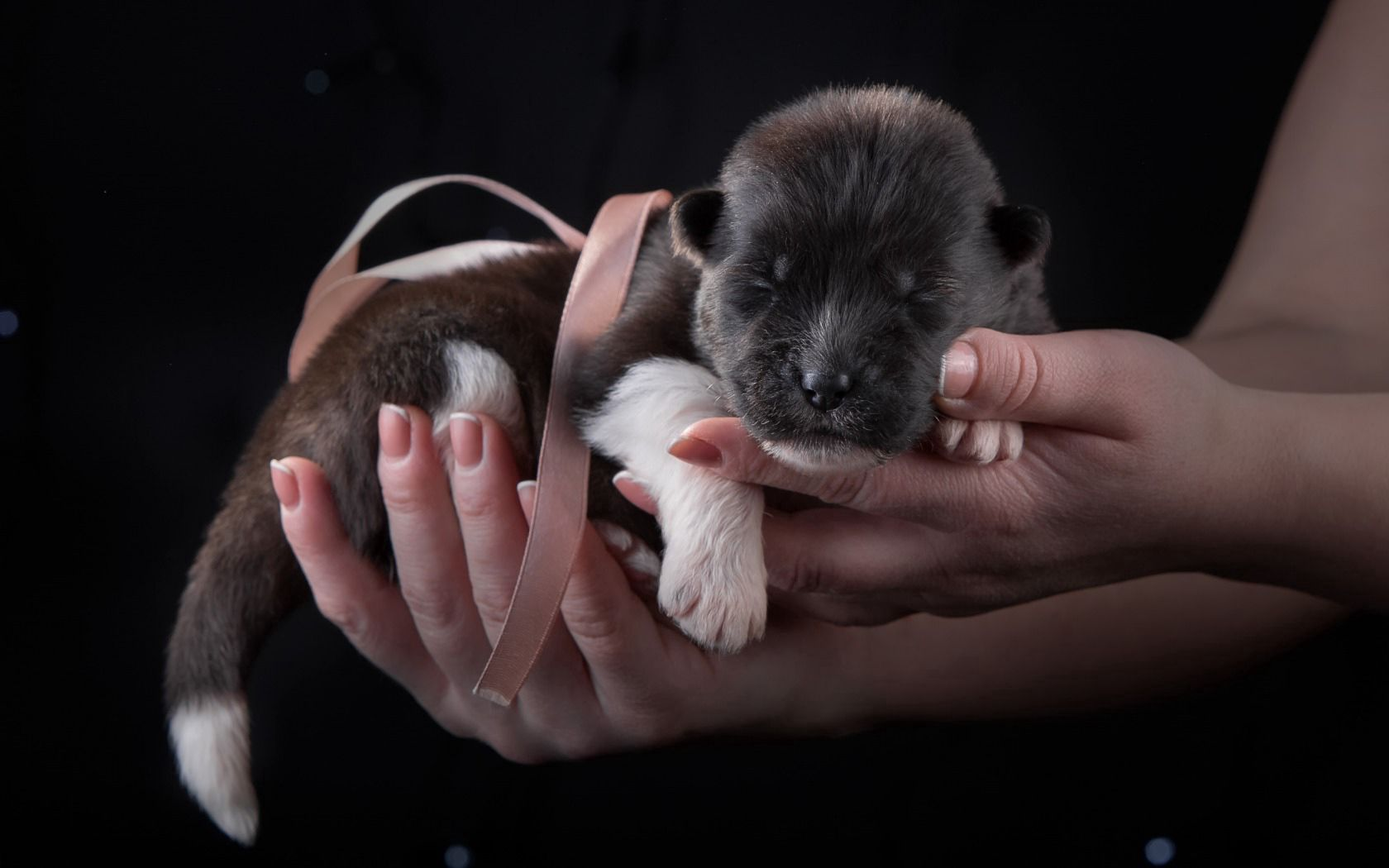 130748 download wallpaper Animals, Puppy, Dog, Tape, Hands screensavers and pictures for free