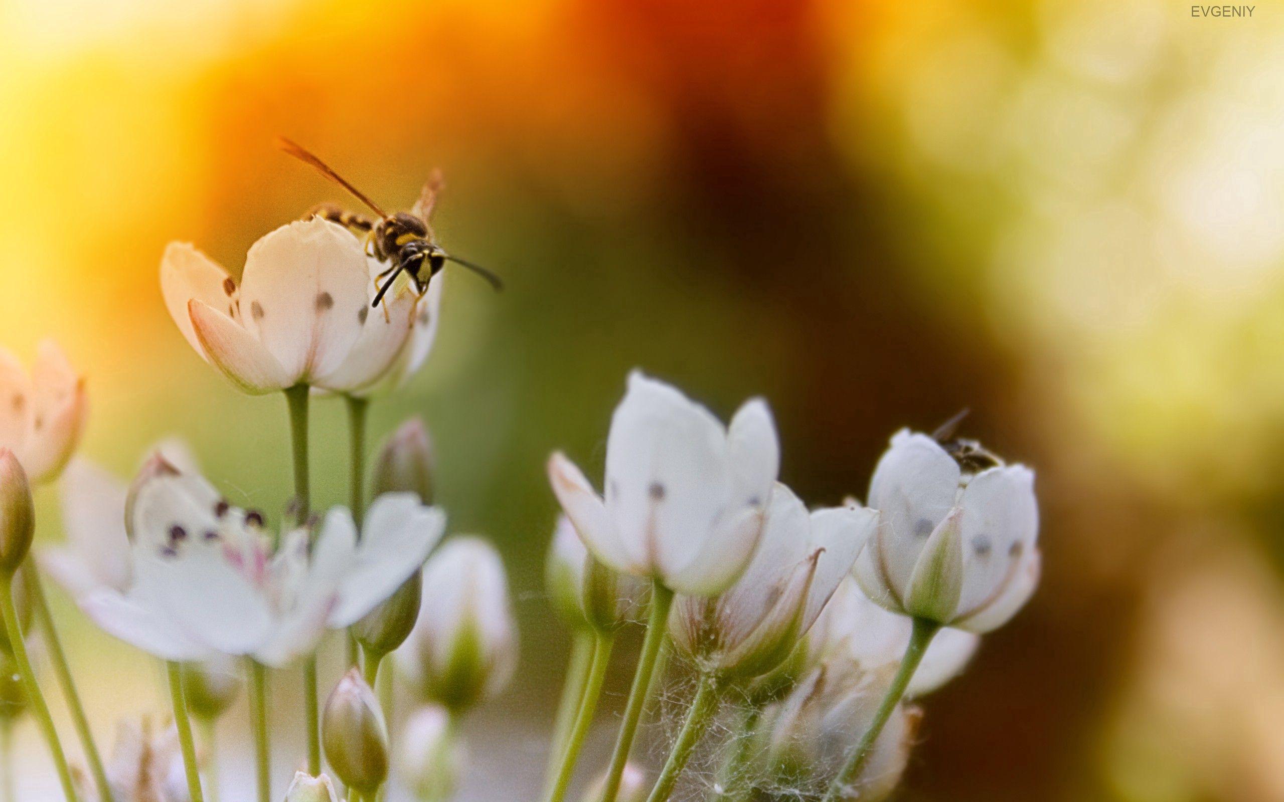 102777 descargar fondo de pantalla Macro, Vuelo, Brillar, Luz, Sol, Flores, Insectos: protectores de pantalla e imágenes gratis