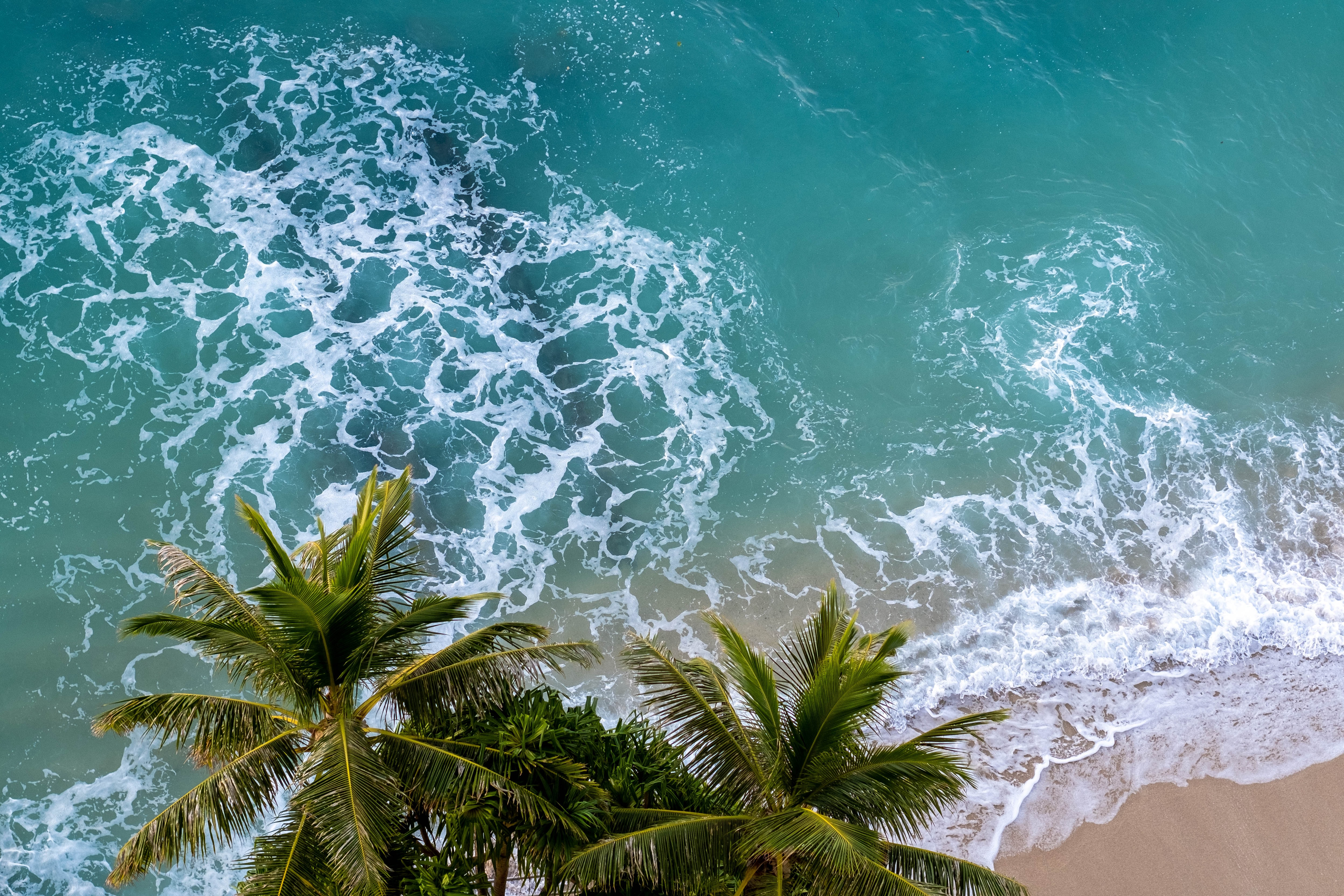 150778 download wallpaper Nature, View From Above, Palm, Beach, Sea screensavers and pictures for free