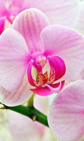 7916 скачать обои Растения, Цветы - заставки и картинки бесплатно