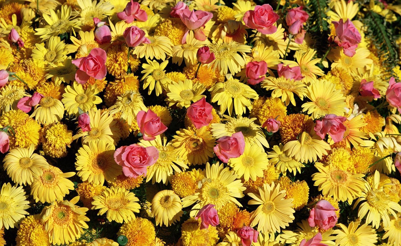 74329 скачать обои Цветы, Множество, Розы, Герберы - заставки и картинки бесплатно