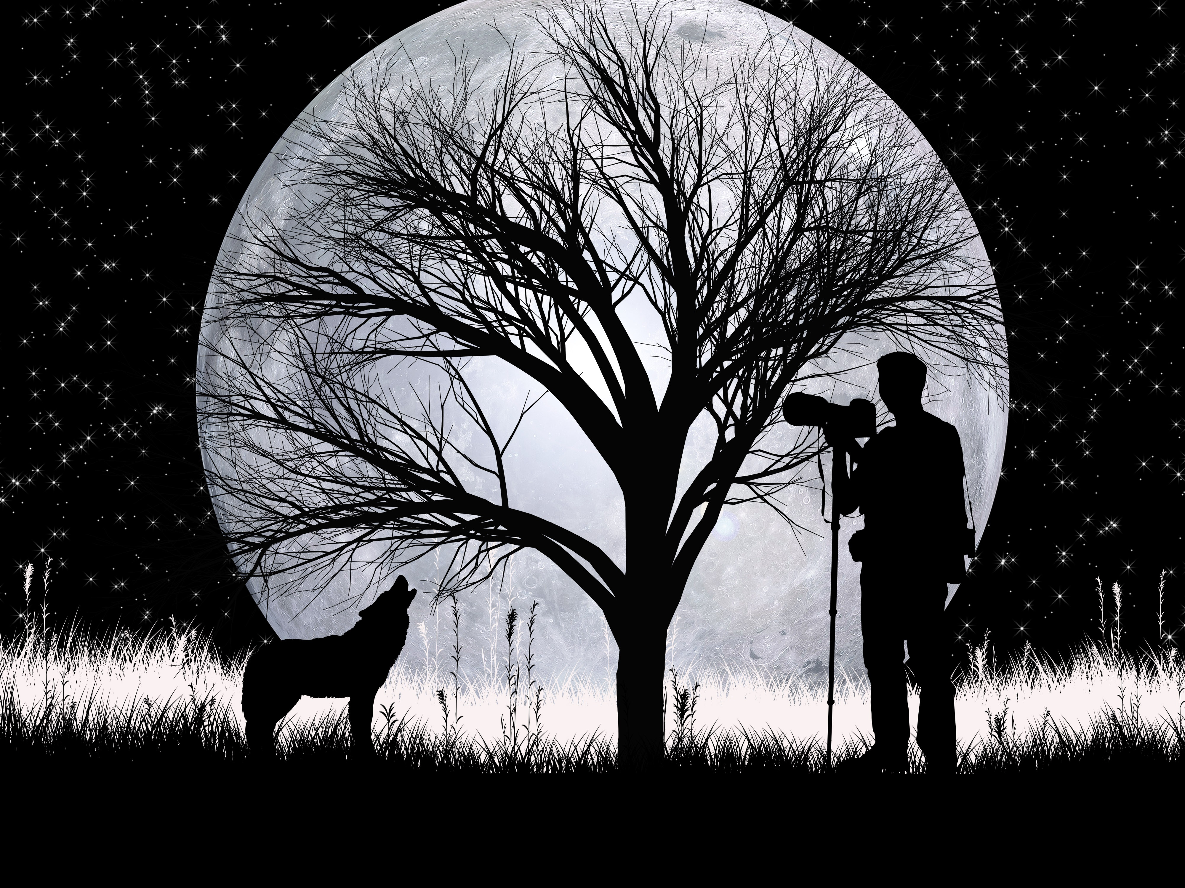 129038 Screensavers and Wallpapers Photographer for phone. Download Art, Vector, Silhouettes, Wolf, Photographer, Full Moon pictures for free