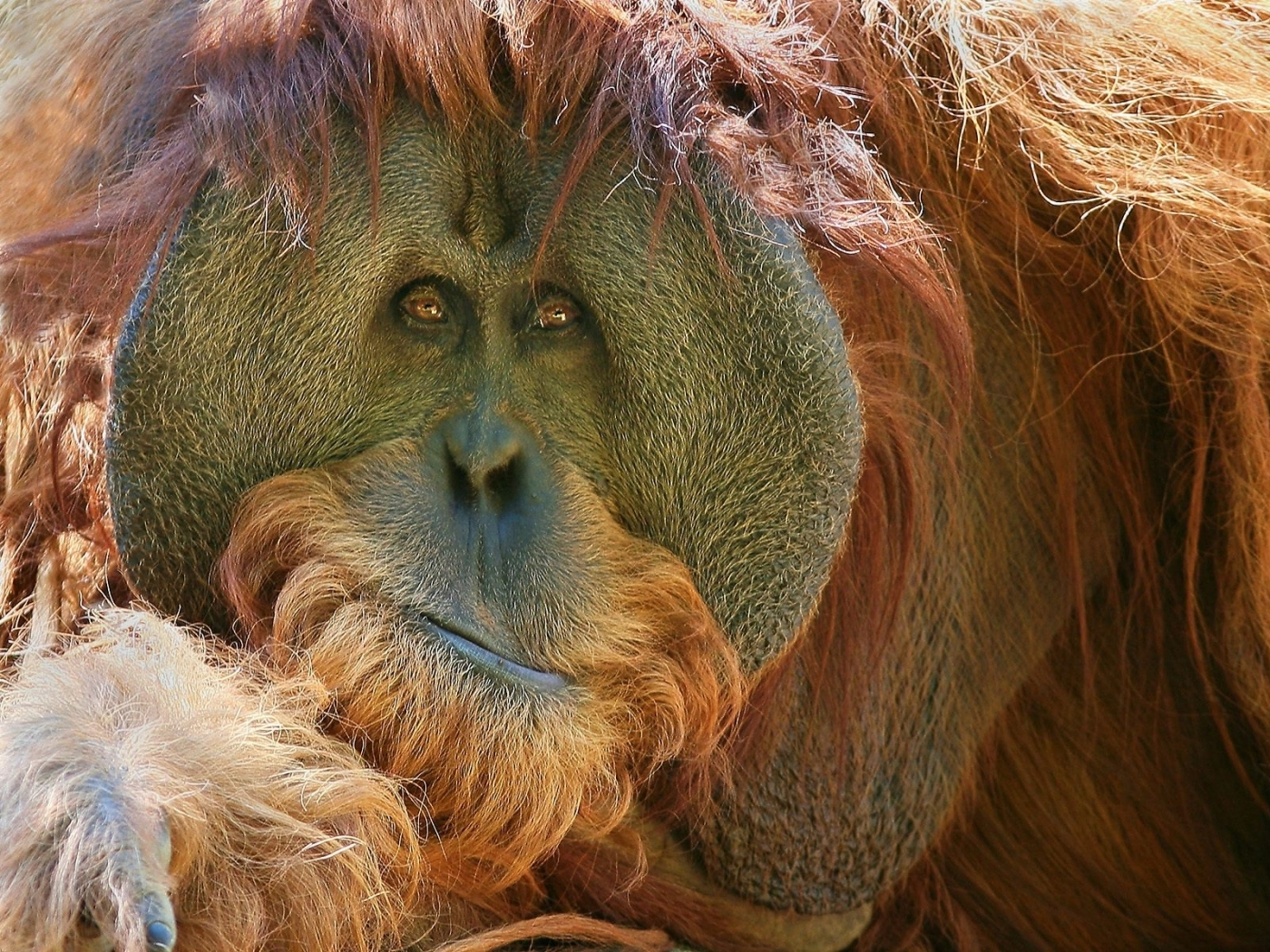28477 Screensavers and Wallpapers Monkeys for phone. Download Animals, Monkeys pictures for free