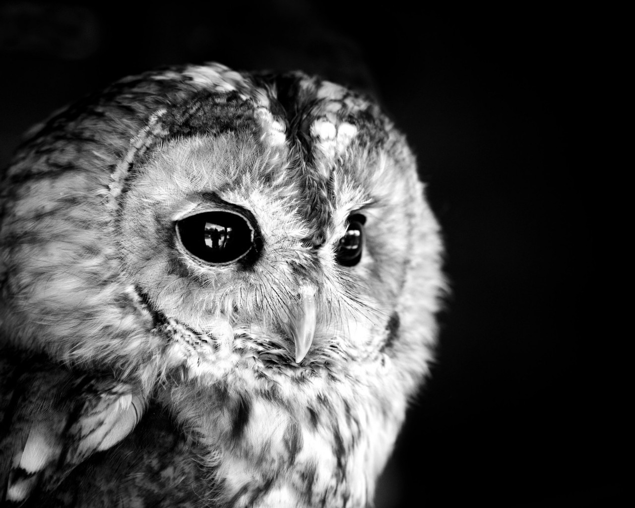 21078 download wallpaper Animals, Birds, Owl screensavers and pictures for free