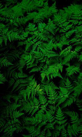 151353 скачать обои Природа, Листья, Растение, Зеленый - заставки и картинки бесплатно