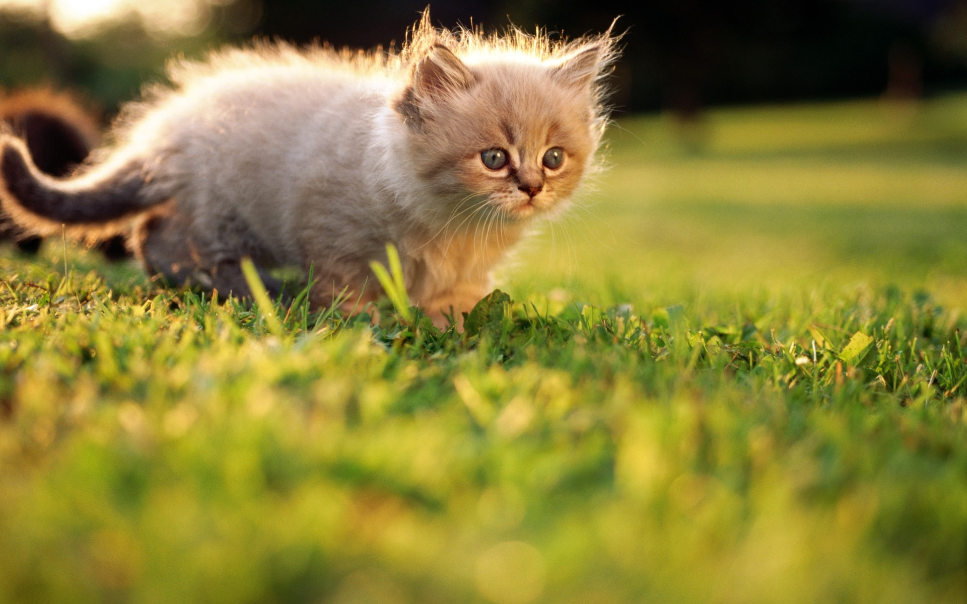 48977 download wallpaper Animals, Cats screensavers and pictures for free